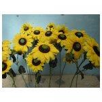 grote zonnebloemen <p>€ 2,50 p/s VERHUUR</p> <p>15 bloemen / 110 x 20 cm (lxb) / zijde</p>