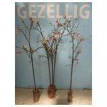 <p>Magnolia takken</p> <p>€ 10,00 p/s VERHUUR</p> <p>5 bloemen / 160 x 40 cm (lxb) / zijde</p>