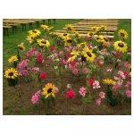 <p>Bloemenveldjes van zijden bloemen</p> <p>€ 1,00 p/s kleine bloemen VERHUUR<br />€ 2,50 p/s grote bloemen VERHUUR</p> <p>verschillende soorten bloemen verkrijgbaar</p>